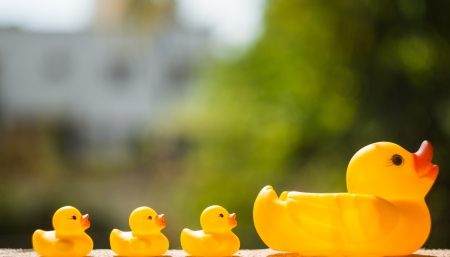 Ducklings and a duck on bokeh background Stock Photo