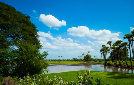 beautiful counry side image with blue sky, water stram and plam trees and fields