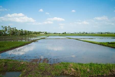an agricultural field full of water