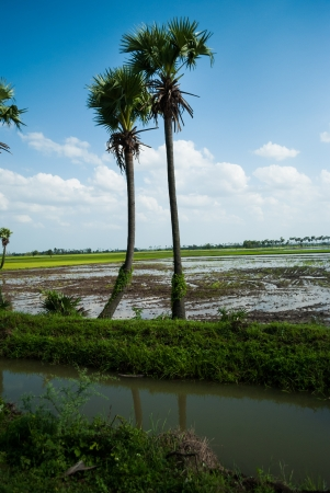palm trees in green fields and water stream