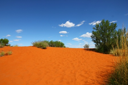 Red sand hill in Australian desert photo