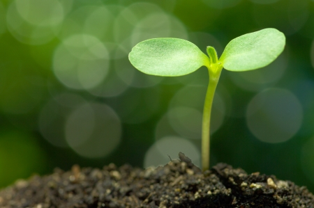 the plant: Sunflower sprout on green bokeh background  horizontal  Stock Photo