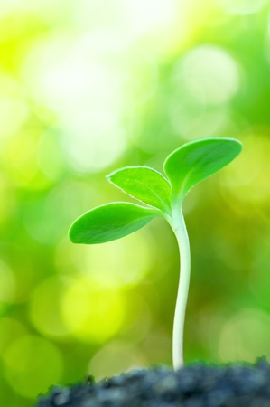 Sunflower sprout on yellow bokeh background  vertical  Standard-Bild