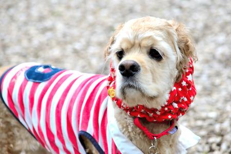 dog Stock Photo - 30620211