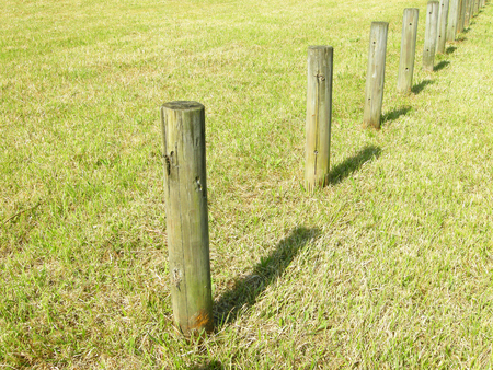 and the stakes: wooden stakes in the park