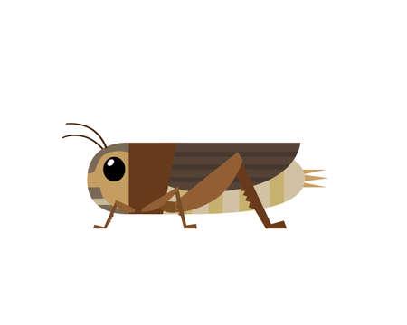 Illustration of edible cricket