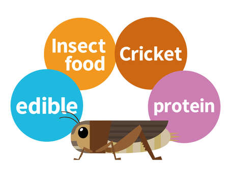 Illustration of edible crickets