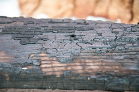 charred wood photo