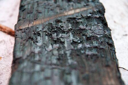 burnt wood  photo