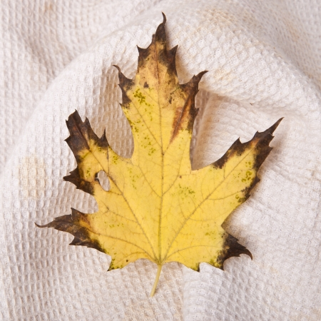 exemption: maple-leaf