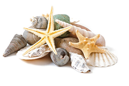scallop shell: starfish, seashells and stones