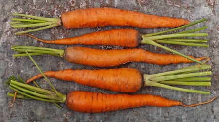 Ripe sweet carrots on a background of old iron.