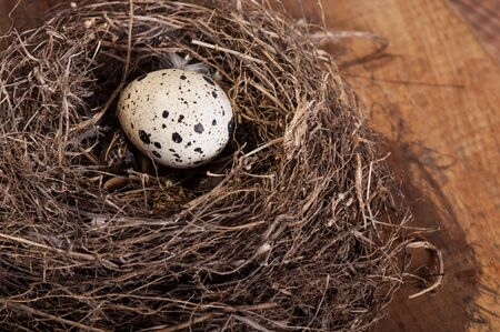 Bird's egg in a natural nest, nature fauna. Stockfoto