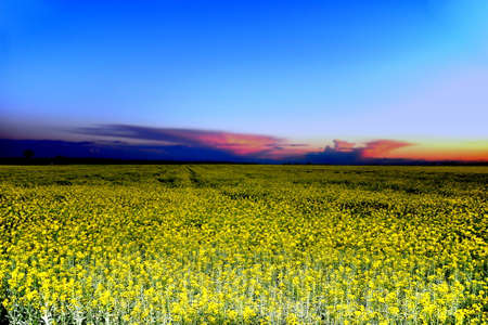 rape field in chzech republic Stock Photo - 24620529