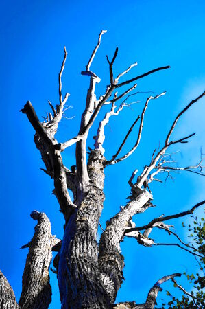 dead tree without leaves in nature Stock Photo
