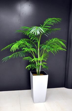 plant in hall of office