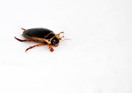 close up of water beetle - isolated