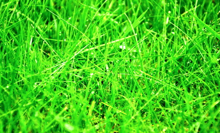 beautiful fresh grass with drops photo