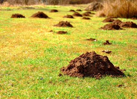 close up of many molehills on the grass 写真素材