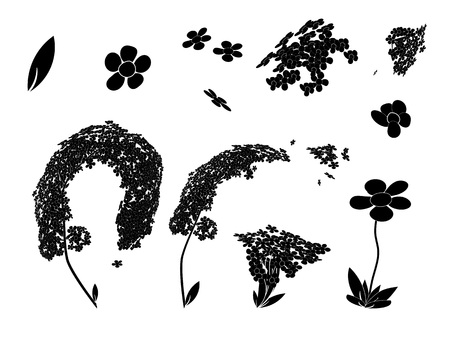 beautiful vector of spirea and daisy with leaves Illustration