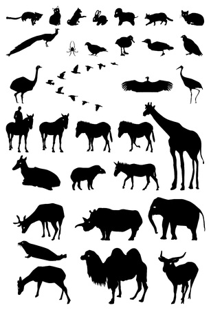 set of silhouette animals domestic, wild, african Vector