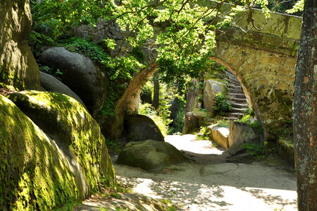 forest path with bridge and staircase photo