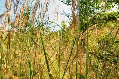 hidden in long grass photo
