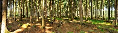 Beau panorama sombre forêt Banque d'images - 31703359