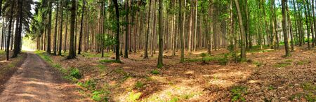 beautiful panorama in dark forest
