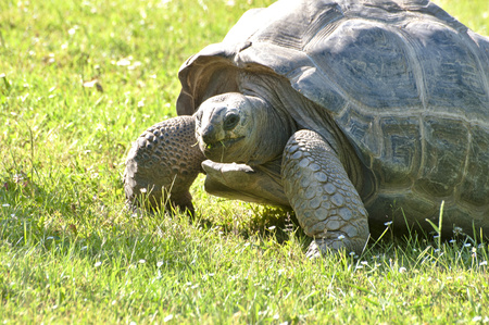 Detail of big old Tortoise in wild nature