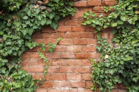 Closeup of brick wall with ivy on the sides Stock Photo