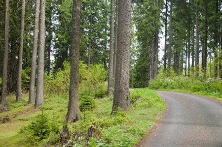Waldweg in der Natur. Wald Pflaster.
