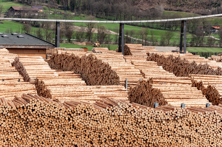 Stock timber in saw mill. Loader working in saw mill. A lot of trunks, stack of wood lumber. Stock Photo
