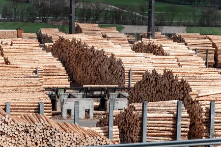 Stock de bois dans une scierie. Chargeur travaillant dans une scierie. Beaucoup de troncs, pile de bois de charpente.
