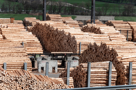 Stock timber in saw mill. Loader working in saw mill. A lot of trunks, stack of wood lumber. Фото со стока