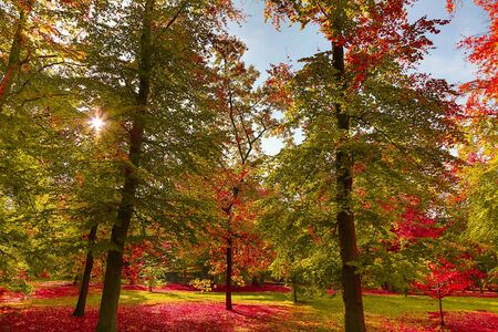 Beautiful forest in autumn. Yellow and red colored trees in autumn landscape with warm sun. Banque d'images