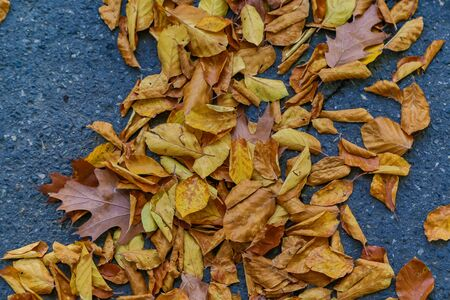 autumn nature. Fallen colored  leaves on ground in park in autumn. Closeup of leaves Banque d'images