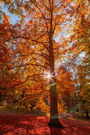 Beautiful forest in autumn. Yellow and red colored trees in autumn landscape with warm sun. Zdjęcie Seryjne