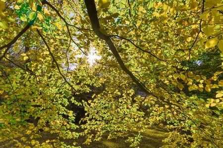 Autumn nature. Close up of branch with colored leaves in autumn with sun rays.