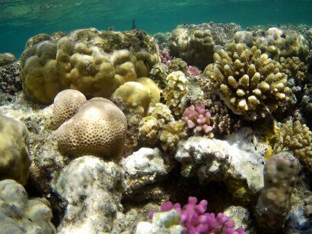 Coral reef with tropical fish near Utopia beach, Marsa Alam, Egypt 2019 Reklamní fotografie