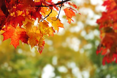 beautiful colorful autumn  leaves in the park photo
