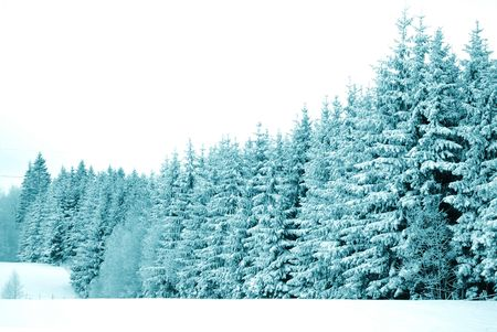 trees with snow in winter Stock Photo - 5725075
