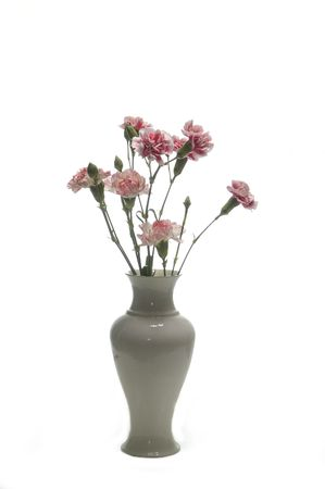 tribute of carnations isolated on white Stock Photo - 5725709