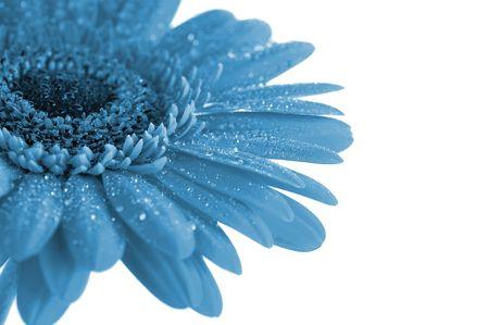 background object: fantasy blue flower close up