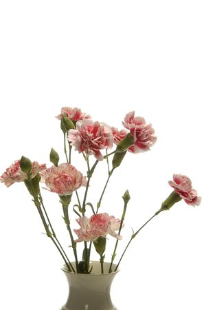 tribute of carnations isolated on white Stock Photo - 5725156