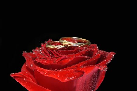 red rose with rings isolated on black photo