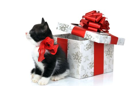 small cute kitten near gift box Stock Photo - 5725800