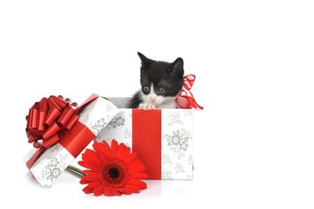 small cute kitten near gift box  Stock Photo