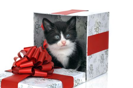small cute kitten inside gift box photo