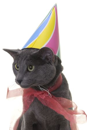 cat with birday hat and ribbon isolated on white photo